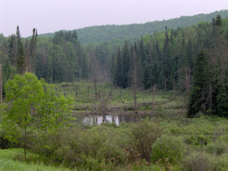 Pond and trees in Triangle State Forest