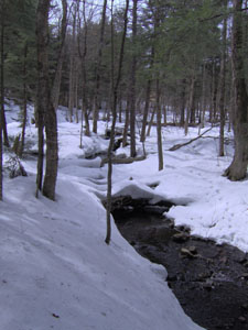 Snow covered forest floor in Trout Brook State Forest