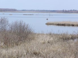 Main open water marsh at Upper and Lower Lakes WMA