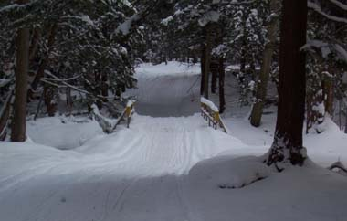 Trail through Whalen Memorial State Forest in winter
