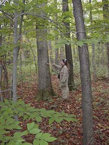Forester measuring a tree in Whalen State Forest