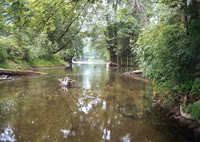 Picture of Wood Creek