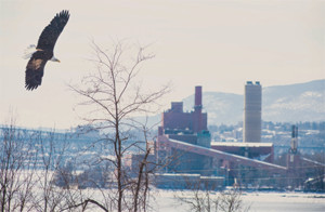 adult bald eagle soaring above bare trees in the foreground with Danskammer Point and Facility in the background