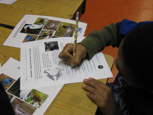 Student using a Hudson River Worksheet