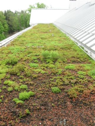 Millbrook School green roof