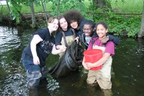 High school students collect eels on a local stream