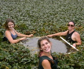 Three scientists in a water chestnut covered pond with a collection device