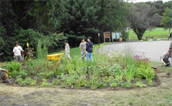 Rain Garden in Rockland County