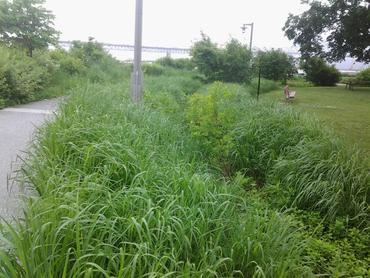 vegetated area next to a path with a bridge over the Hudson in the far background