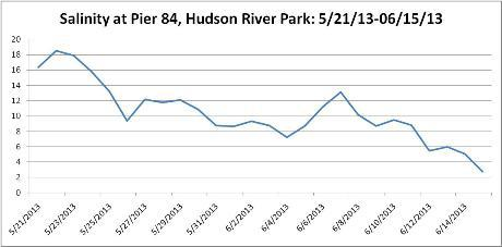 A graph of the salt water levels at Pier 84 in the city shows the estuaries fluctuating salt levels.