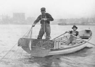 An old photo of two shad fishermen pulling their catch onto their boat