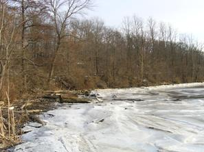 Ice and woody debris along a vegetated shoreline