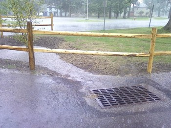 image of a stormdrain in the foreground with rainwater flowing from a tree filter in the background toward the drain