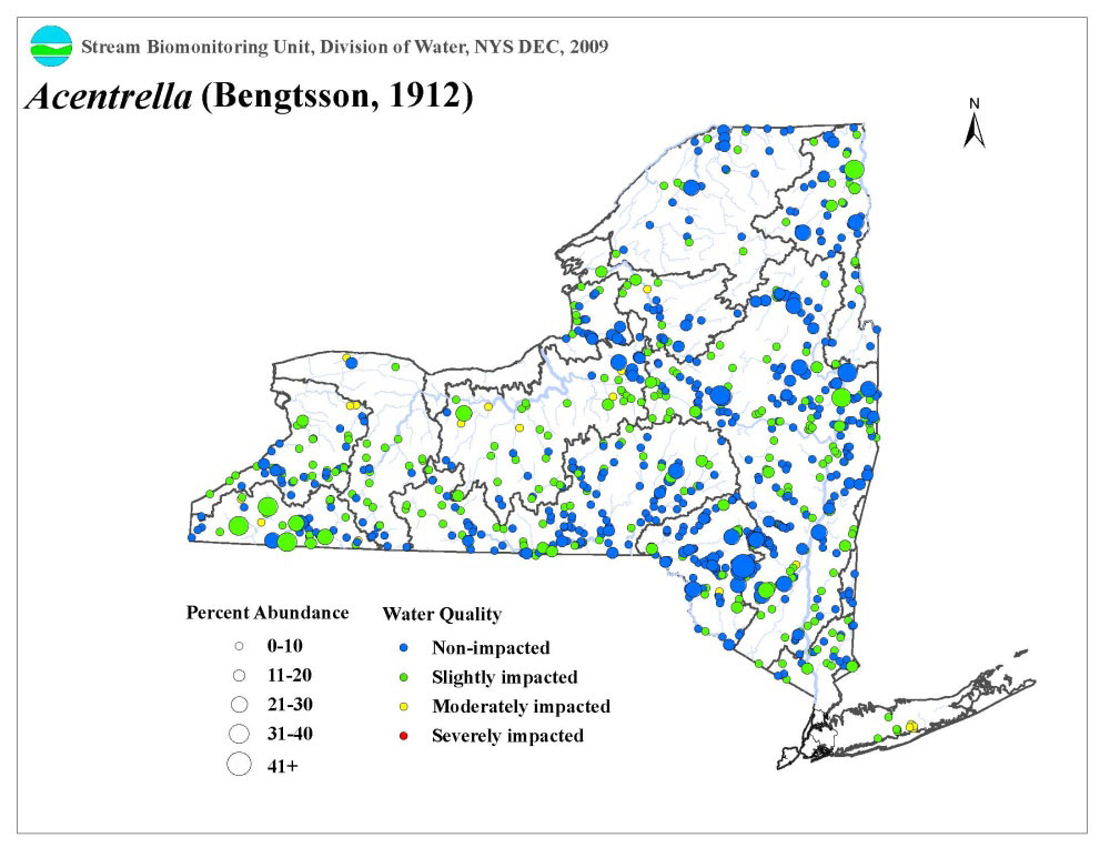 Distribution map of the Acentrella sp. mayfly in NYS