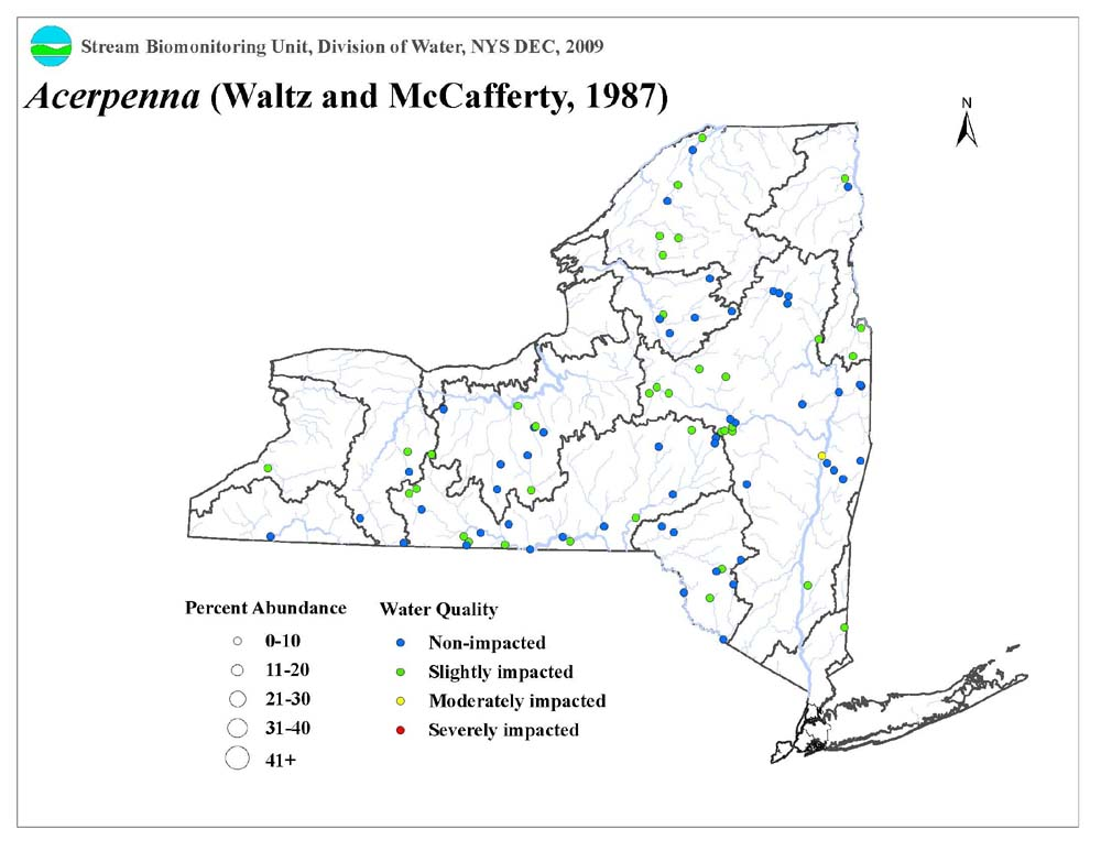 Distribution map of the Acerpenna sp. mayfly in NYS