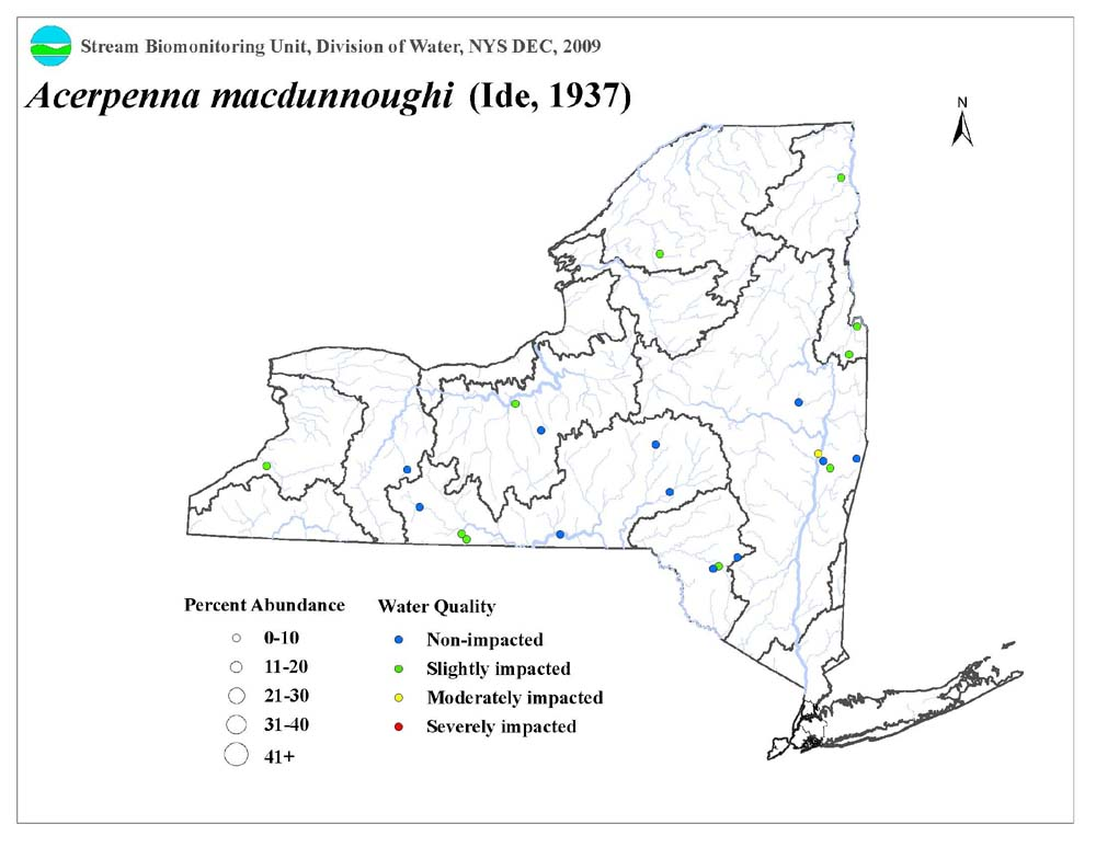 Distribution map of the Acerpenna macdunnoughi mayfly in NYS