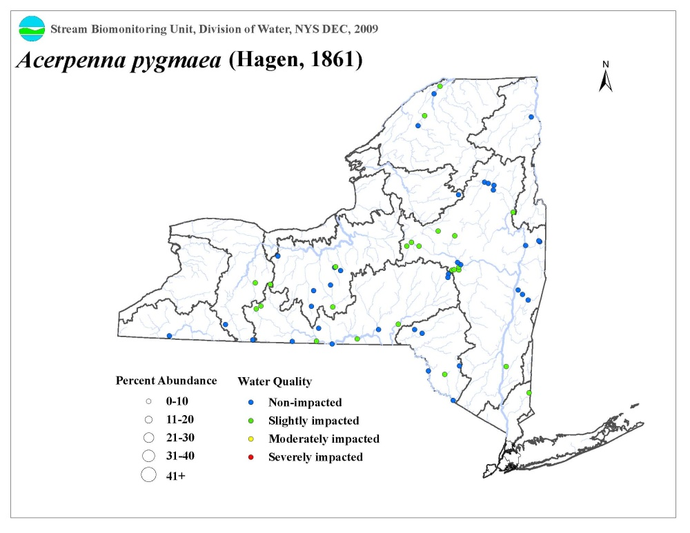 Distribution map of the Acerpenna pygmaea mayfly in NYS