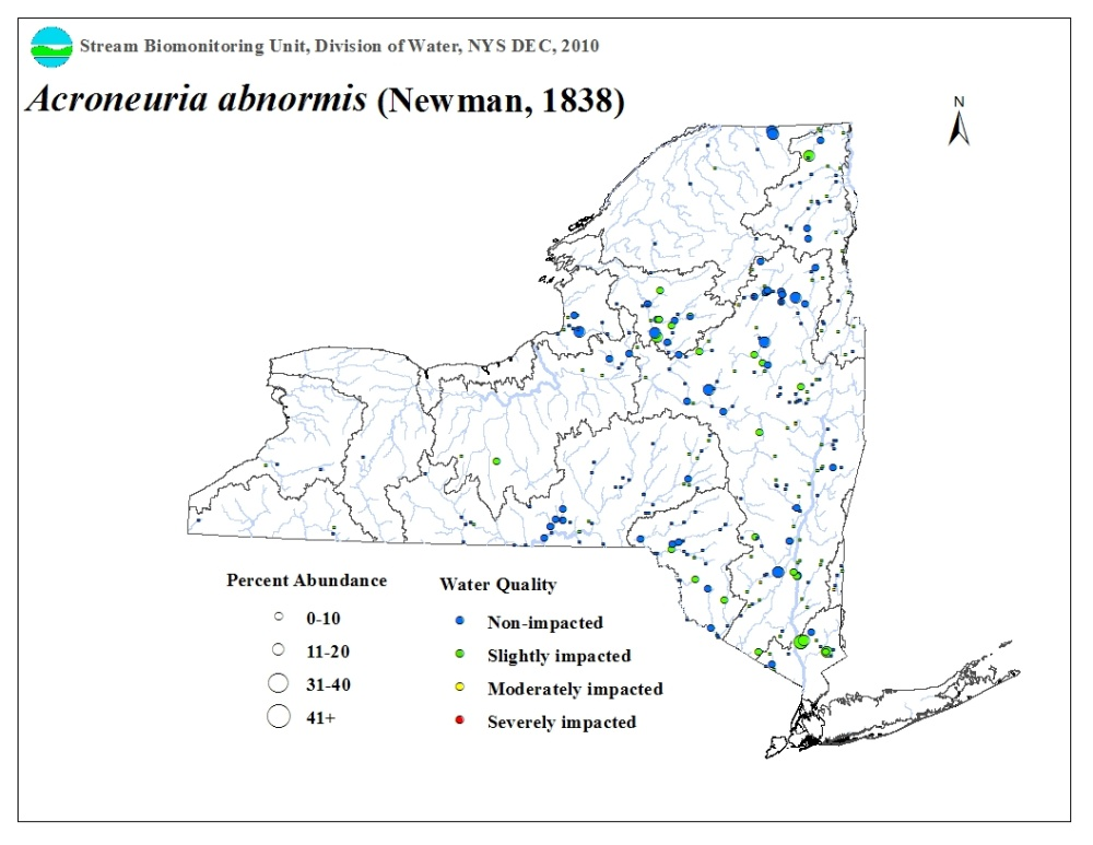 Distribution map of the Acroneuria abnormis stonefly in NYS