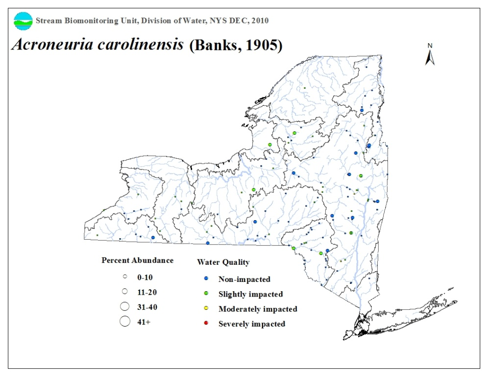 Distribution map of the Acroneuria carolinensis stone fly in NYS