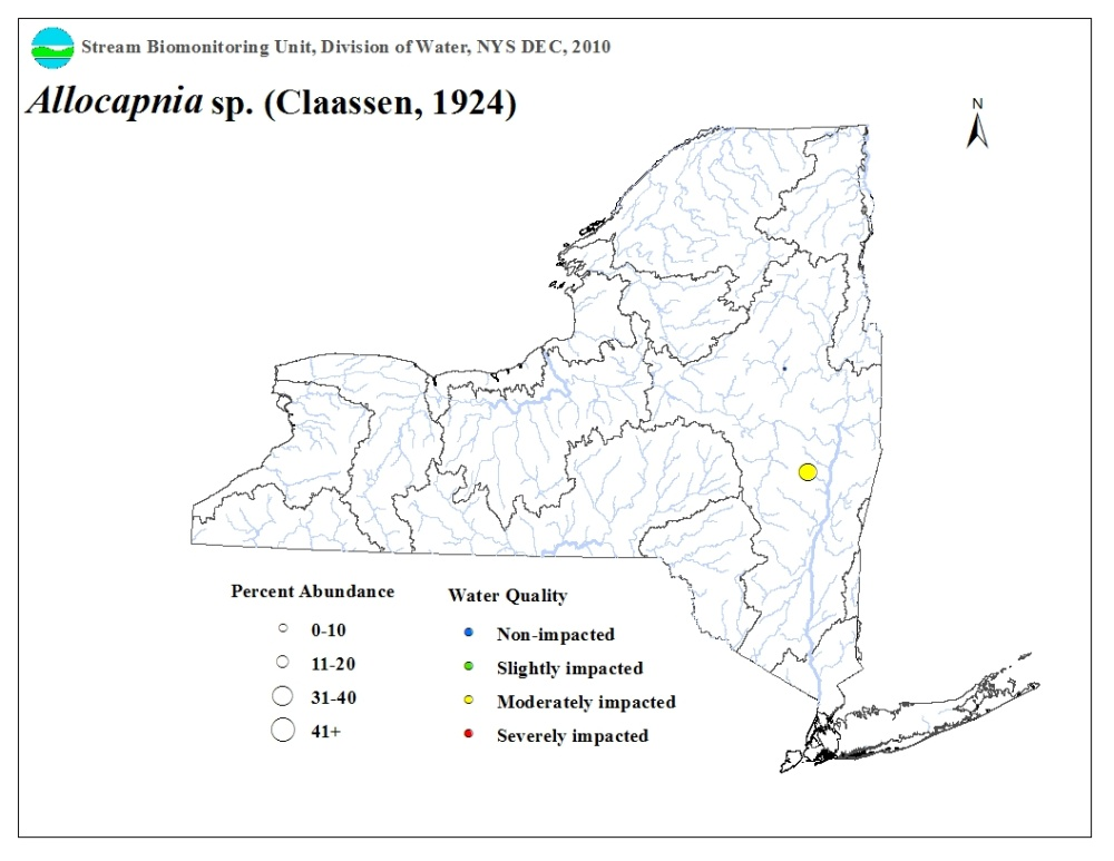 Distribution map of the Allocapnia sp. stonefly in NYS