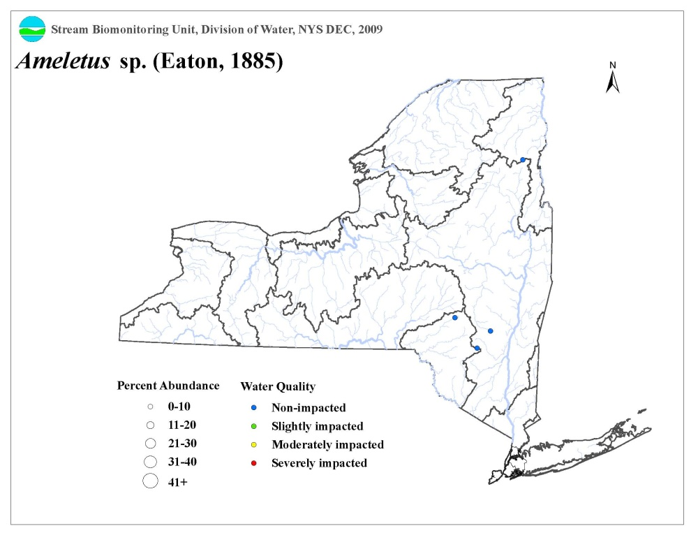 Ditribution map of the Ameletus sp. mayfly in NYS.