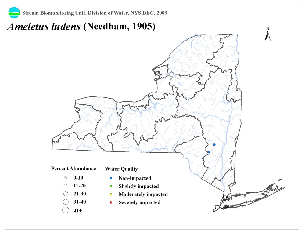 Distribution map of the Ameletus ludens mayfly in NYS