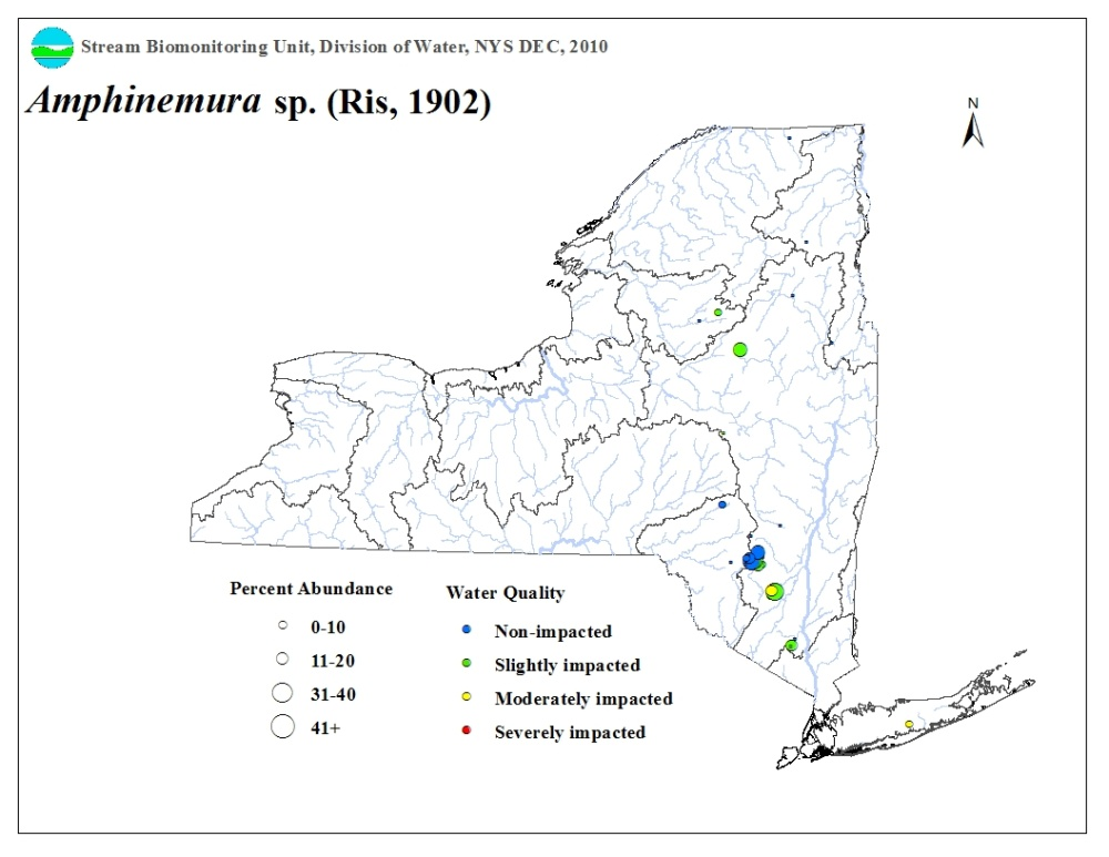 Distribution map of the Amphinemura sp. stonefly in NYS