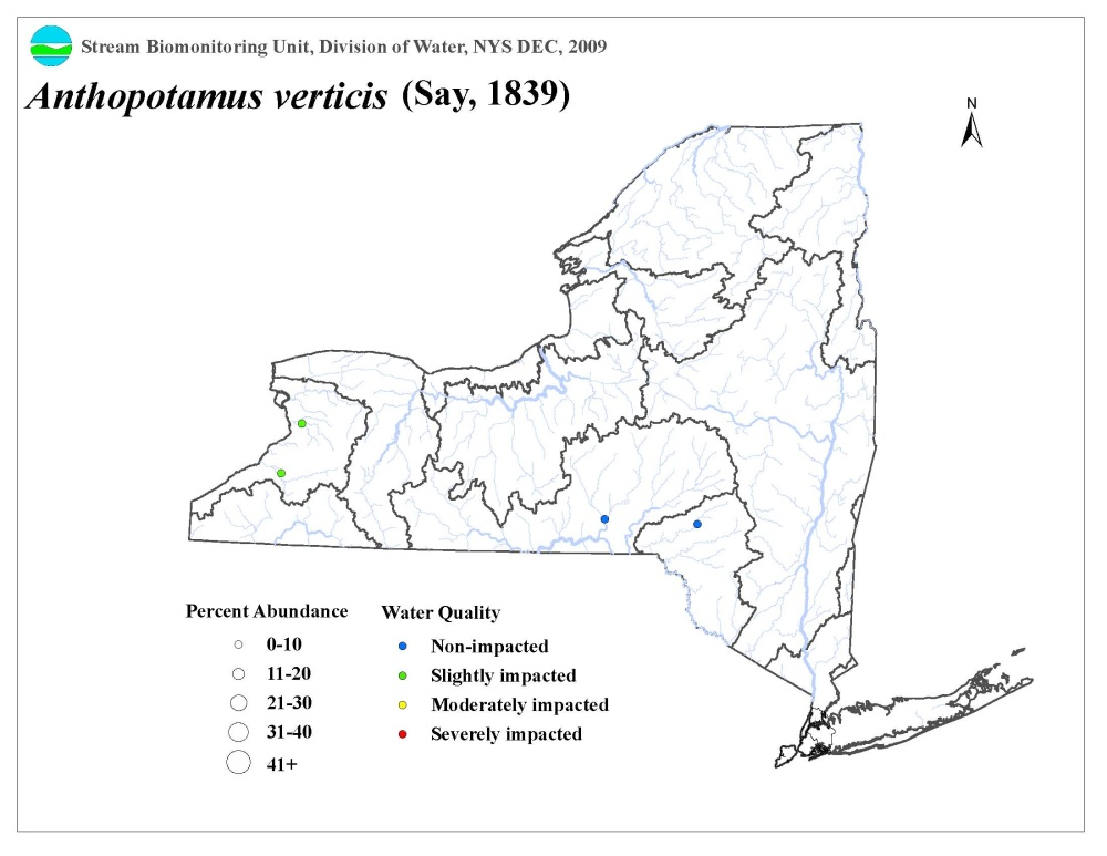 Distribution map of the Anthopotamus verticis mayfly in NYS