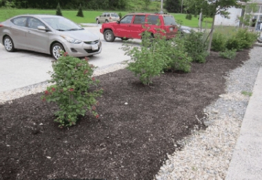vegetated swale in a parking lot