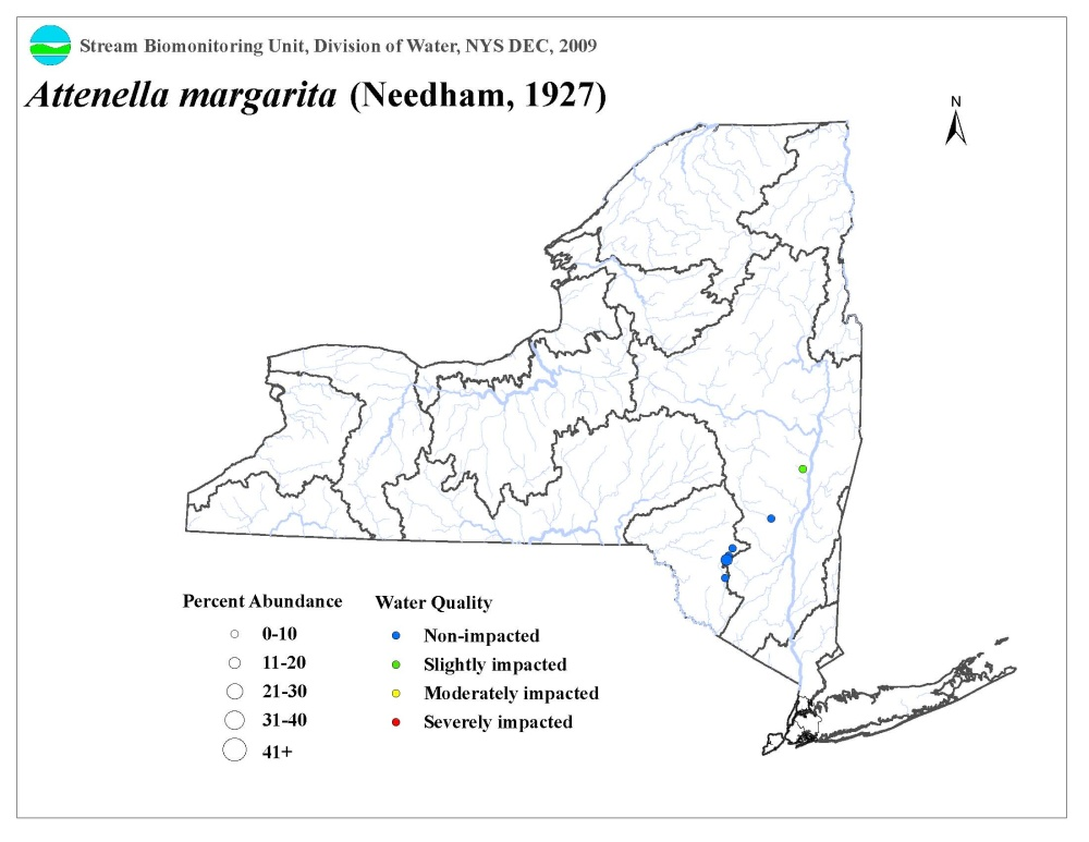 Distribution map of the Attenella margarita mayfly in NYS