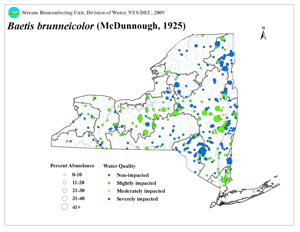 Distribution map of the Baetis Brunneicolor mayfly in NYS