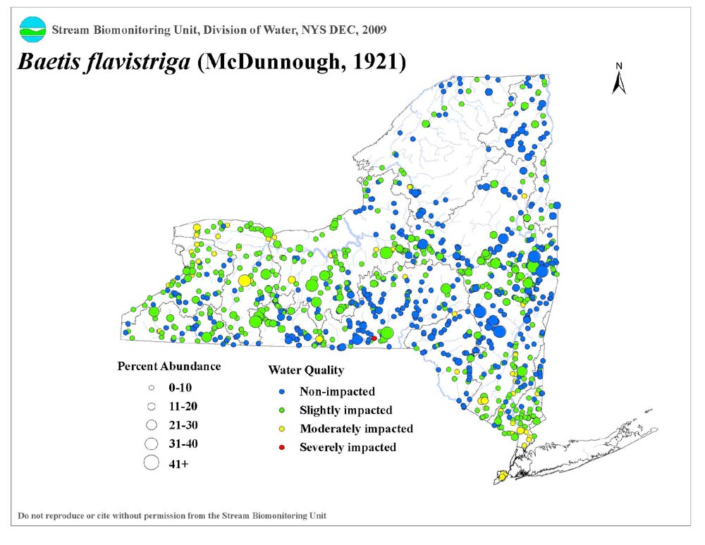 Distribution map of the Baetis flavistriga mayfly in NYS