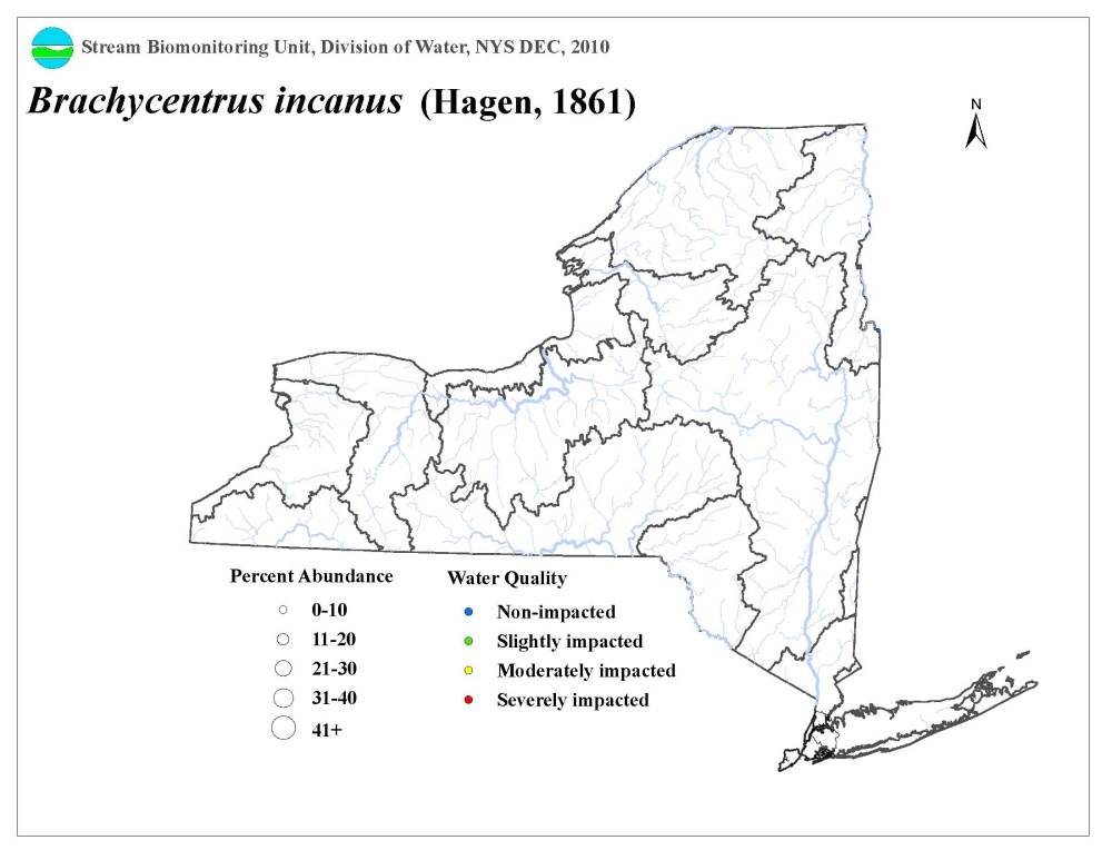 Distribution map of the Brachycentrus incanus caddisfly in NYS