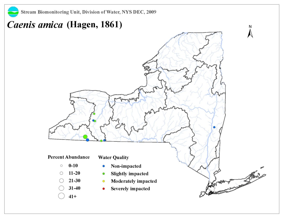 Distribution map of the Caenis amica mayfly in NYS