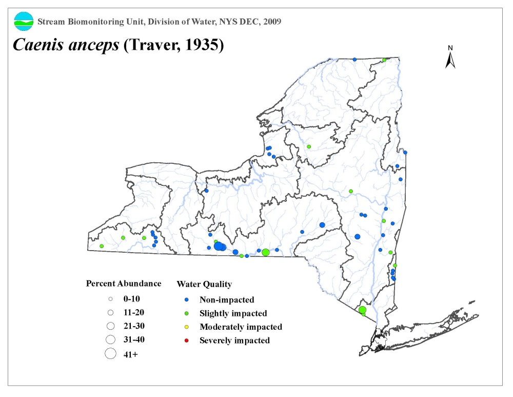 Distribution map of the Caenis anceps mayfly in NYS
