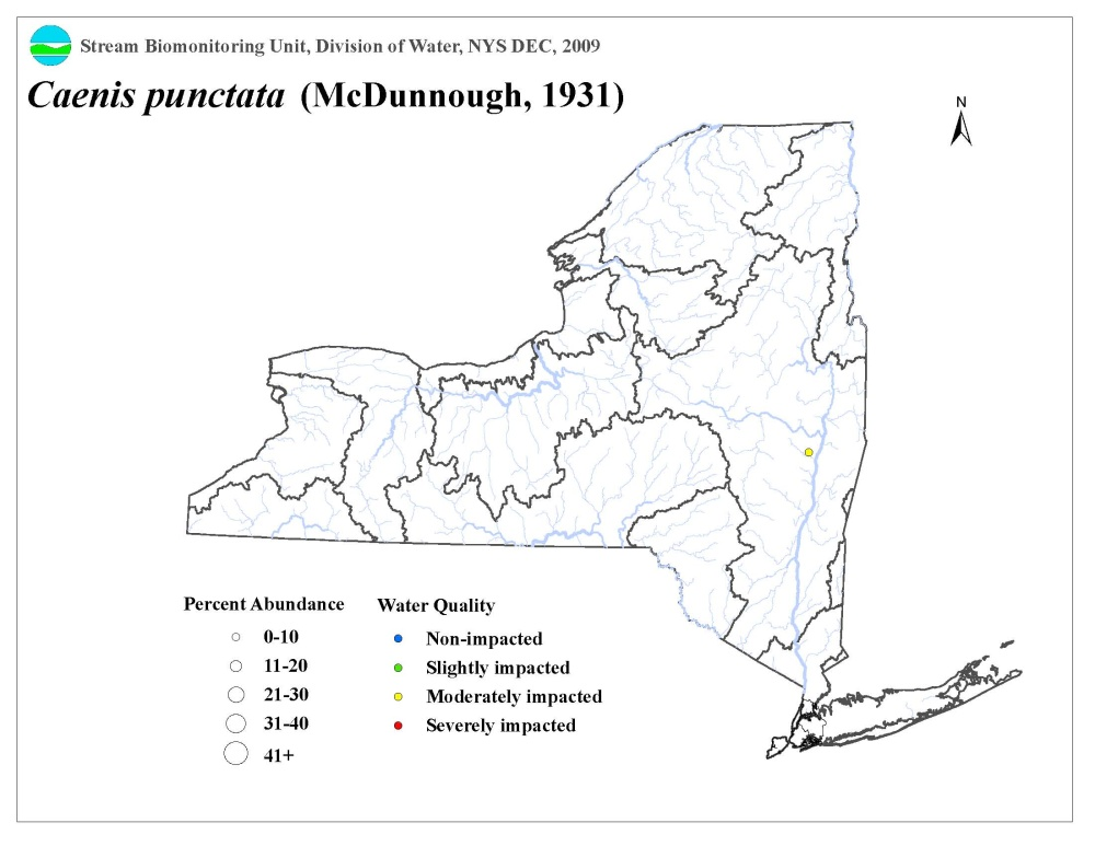 Distribution map of the Caenis punctata mayfly in NYS