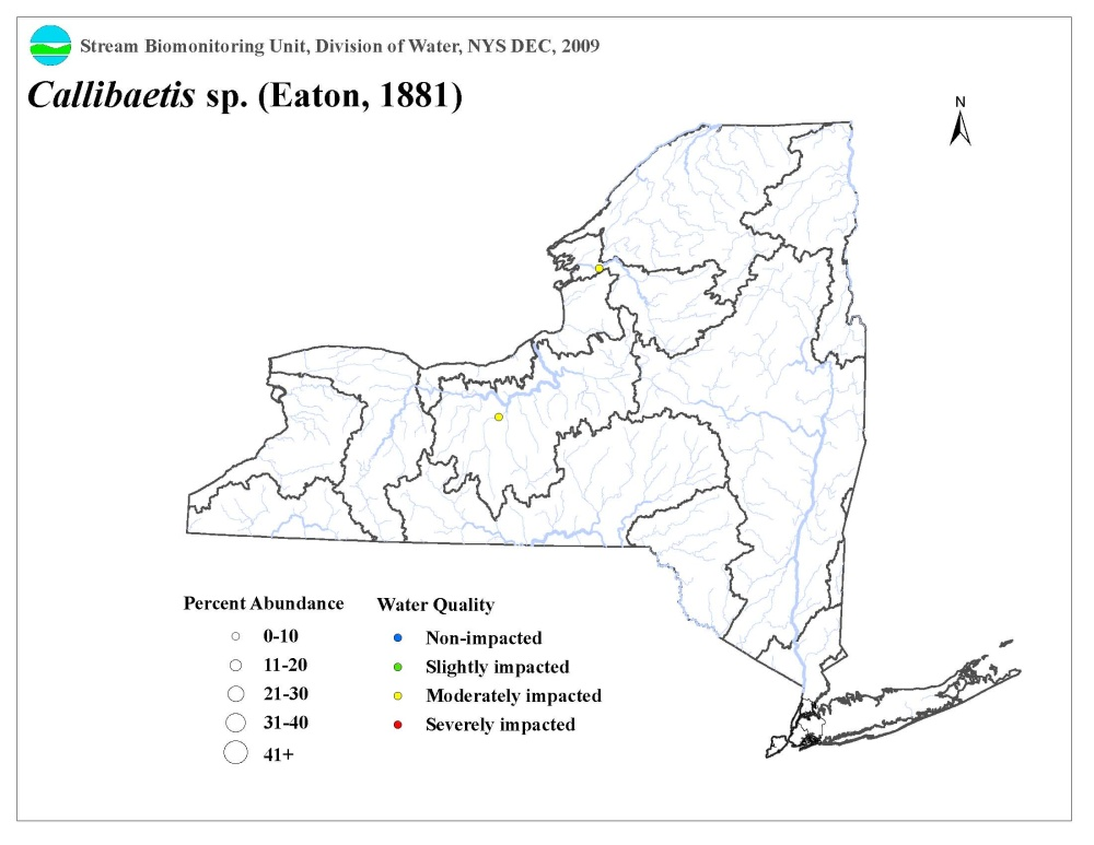 Distribution map of the Callibaetis sp. mayfly in NYS