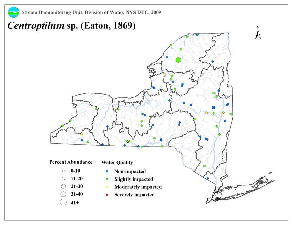 Distribution map of the Centroptilum sp. mayfly in NYS