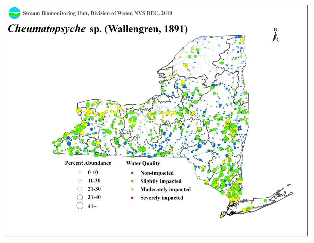 Distribution map of the Cheumatopsyche sp. caddisfly in NYS