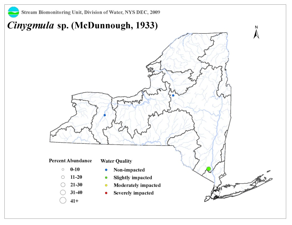 Distribution map of the Cinygmula sp. mayfly in NYS
