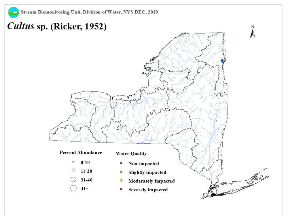 Distribution map of the Cultus sp. stonefly in NYS
