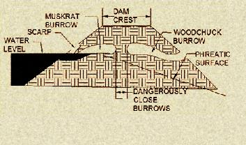 Cross-section of a dam showing damaging holes from animal burrows