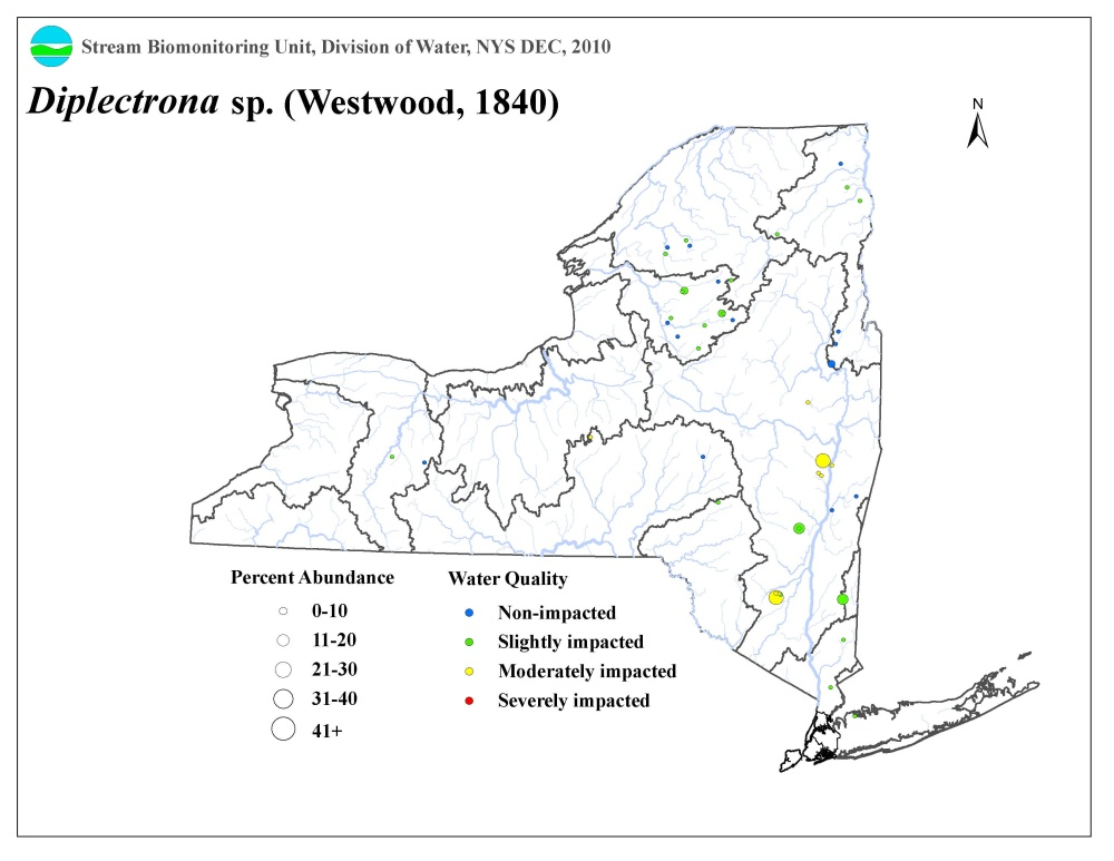Distribution map of the Diplectrona sp. caddisfly in NYS