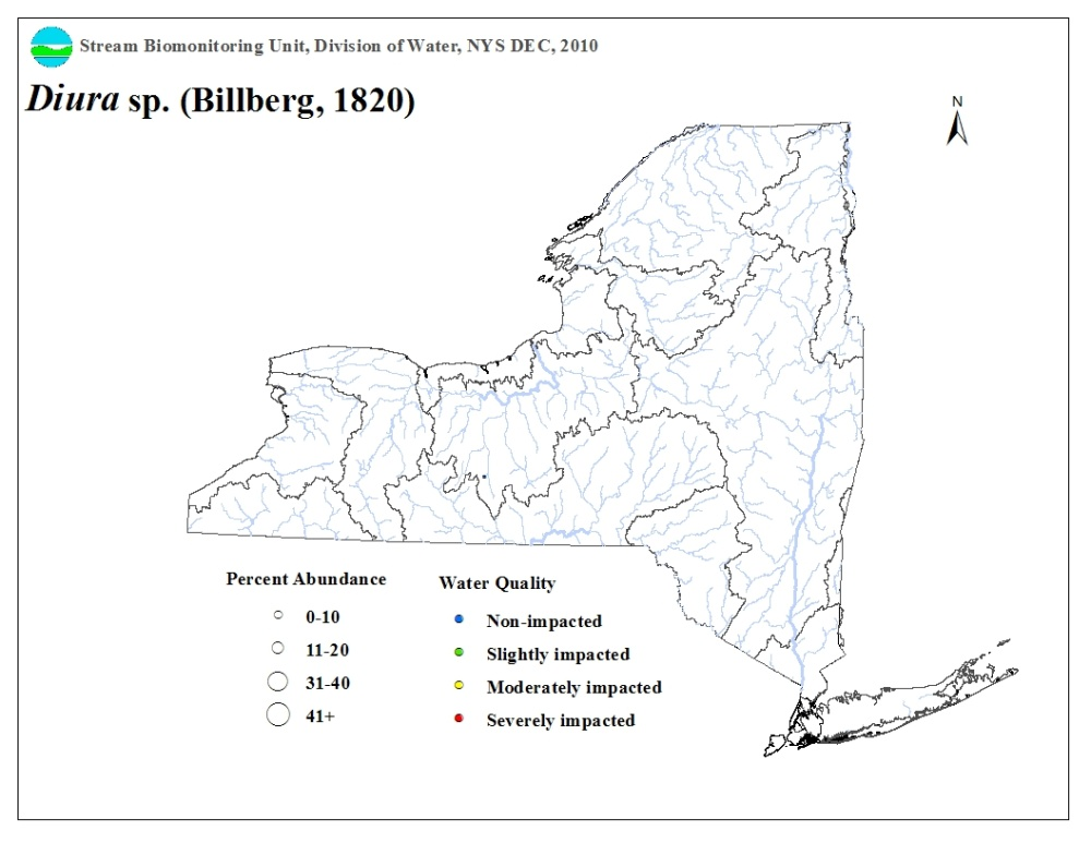 Distribution map of the Diura sp. stonefly in NYS
