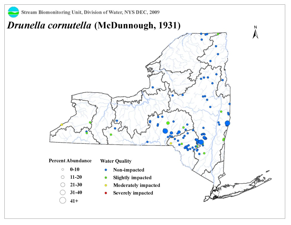 Distribution map of the Drunella cornutella mayfly in NYS