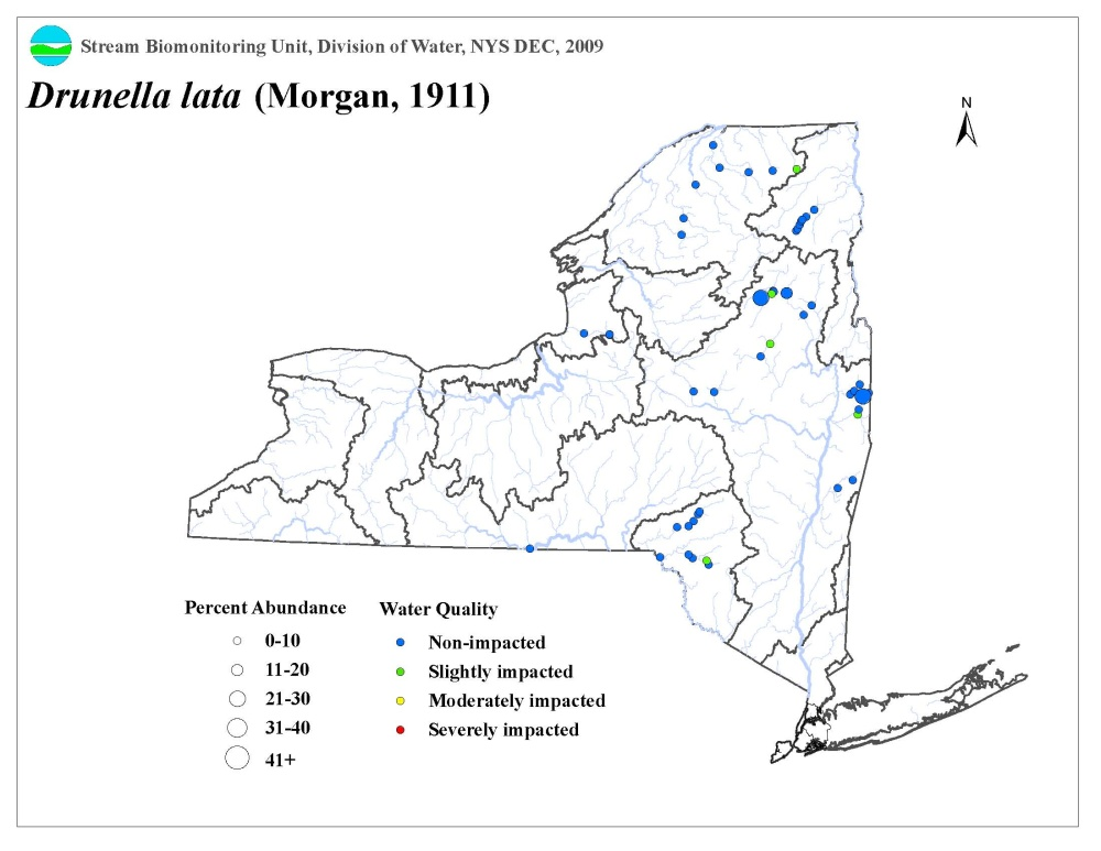 Distribution map of the Drunella lata mayfly in NYS