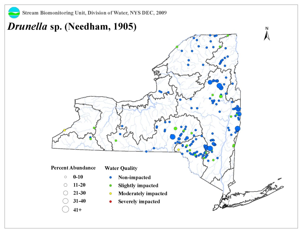 Distribution map of the Drunella sp. mayfly in NYS