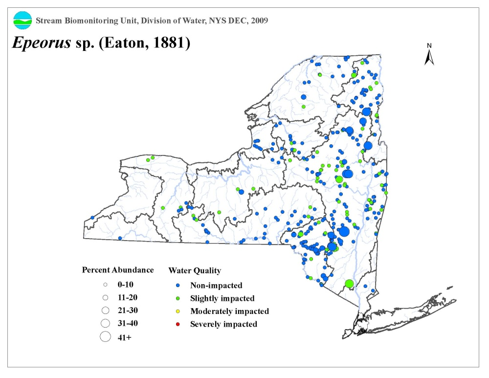 Distribution map of the Epeorus sp. mayfly in NYS