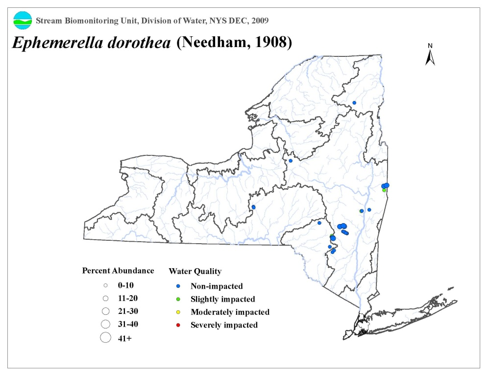Distribution map of the Ephemerella dorothea mayfly in NYS