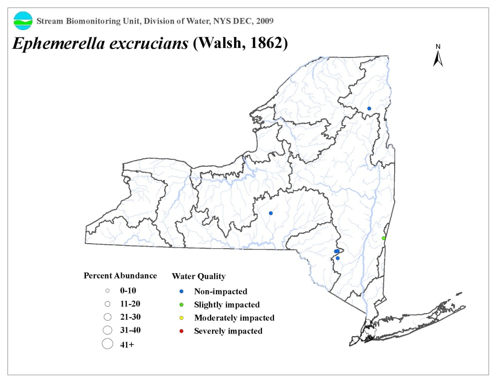 Distribution map of the Ephemerella excrucians mayfly in NYS